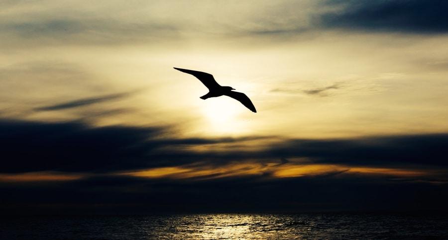 renew hope, redetermine