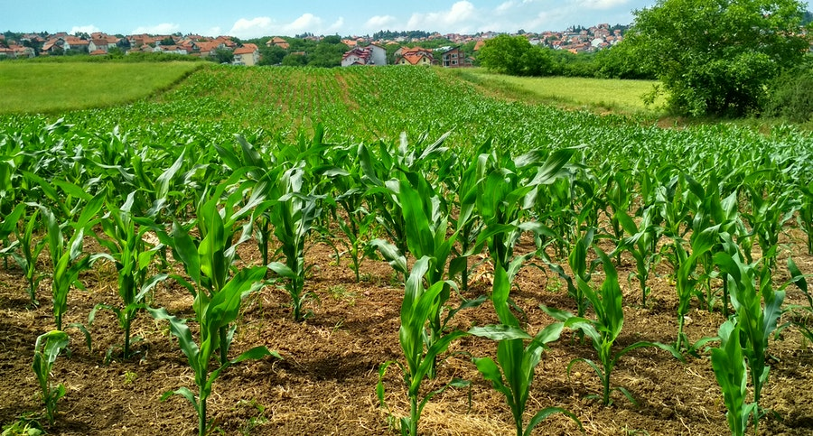 crop production in Ghana