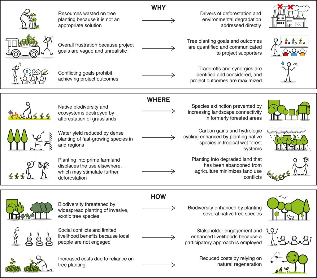 Ways that tree planting could lead to environmental degradation and the best practices for mitigating that risk through carbon sinks.
