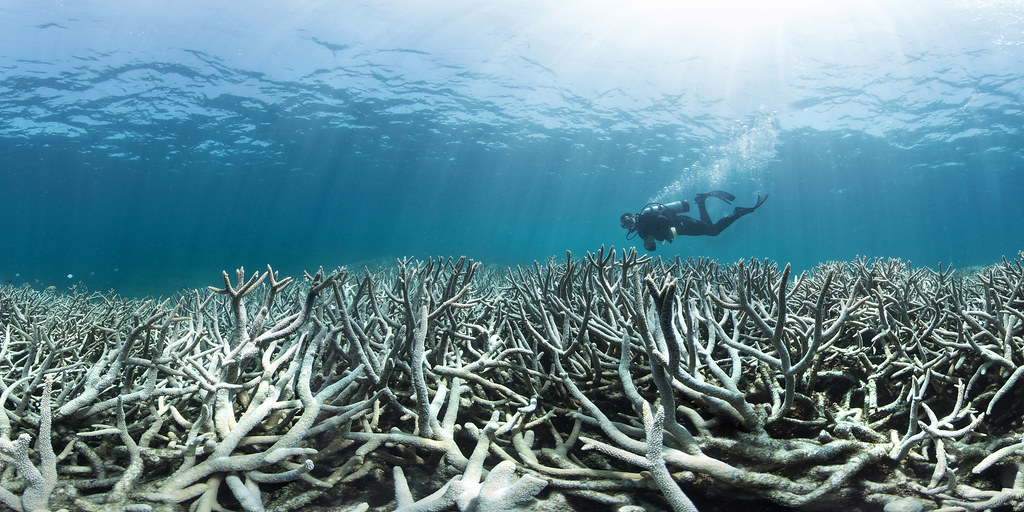 Evidence of reaching climate tipping points: Coral bleaching