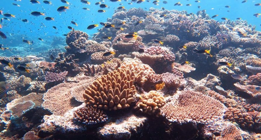 seaspiracy review