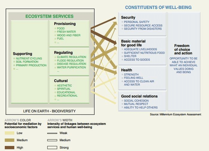Benefits of Environmental Volunteering: Links between Ecosystem goods and services and human well-being