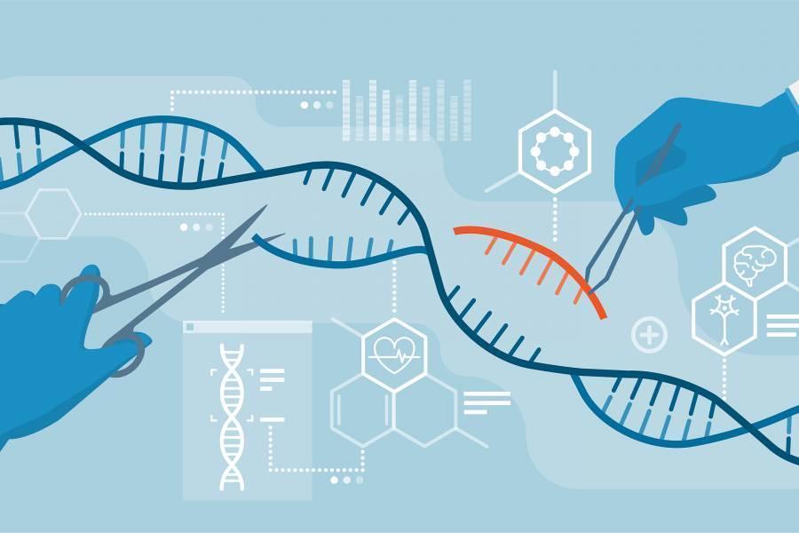 CRISPR gene editing tool
