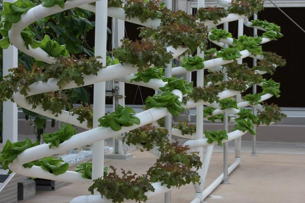 Hydroponics system in a vertical farm
