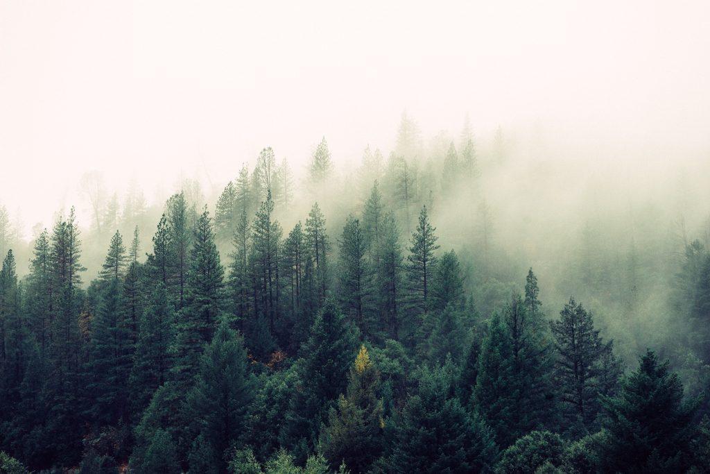 Importance of reforestation