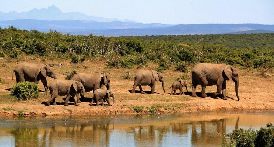 Conservation Areas Africa